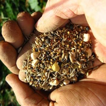 Samen für Weinbergskräuter