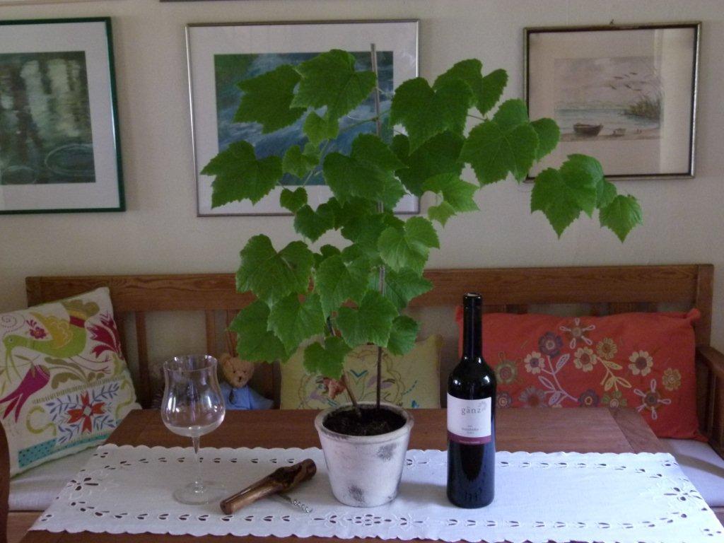 Gänz-Wein bei Schiffer
