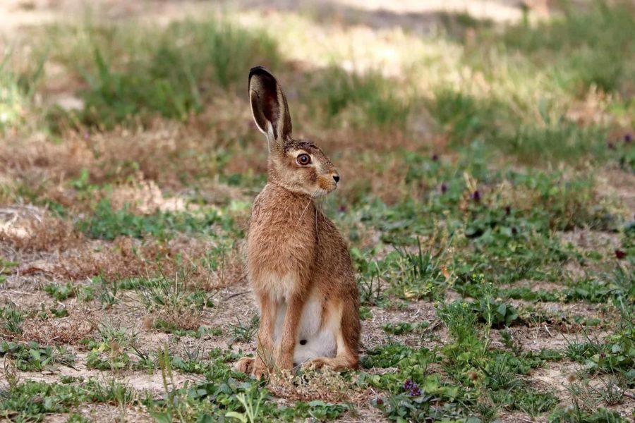 Ist Jagd Naturschutz?